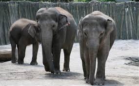 Buffalo Zoological Gardens